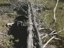 Aegviidu metsades