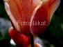 Lilled ja taimed