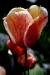 Vihmaklaas_0164_copy