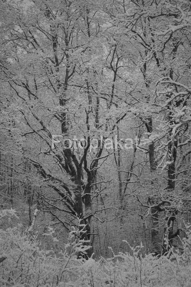 soomaa 18.12.2005