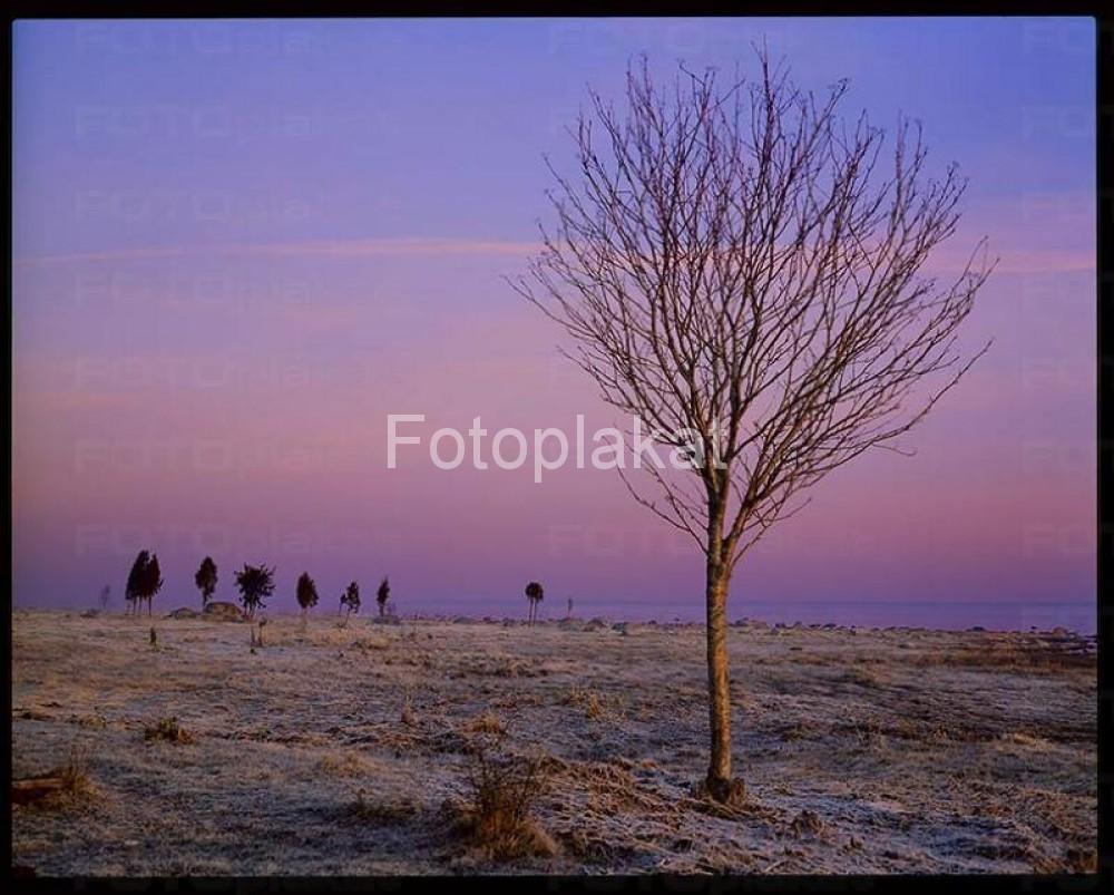 Kodak_64_4X5001