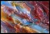 PetrifiedForest-macro_3_sRG