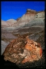 PetrifiedForest_7